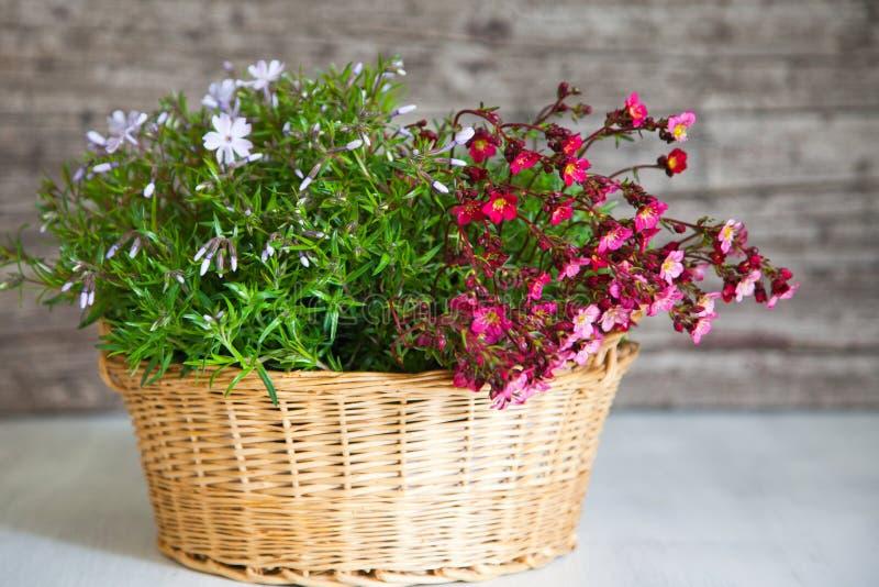 Panier rempli de fleurs roses et blanches photographie stock