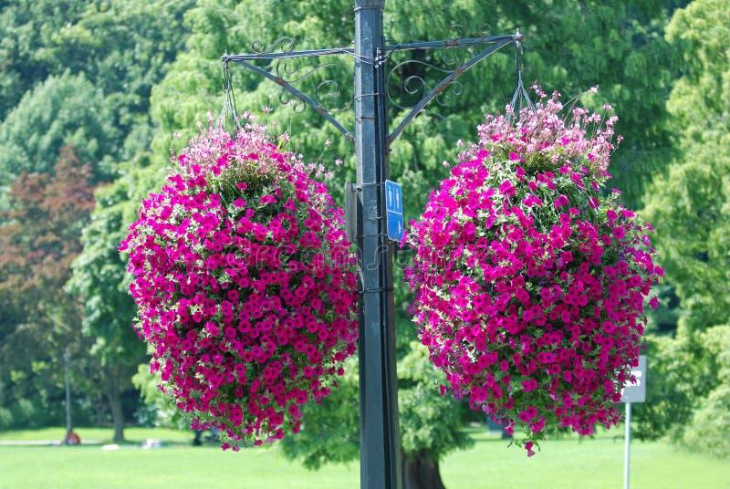 Panier s'arrêtant de fleur photographie stock