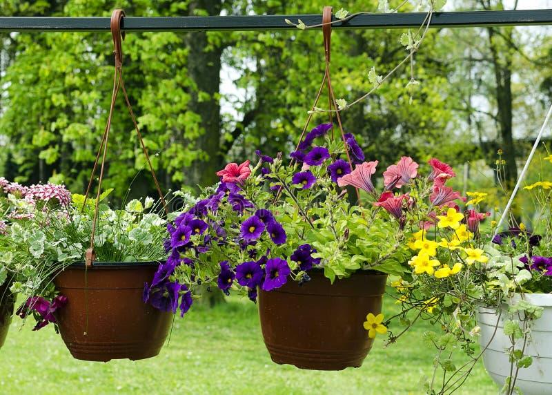 Paniers accrochants avec des fleurs images stock