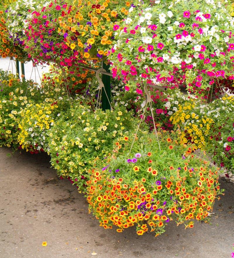 Paniers s'arrêtants de fleur photo stock