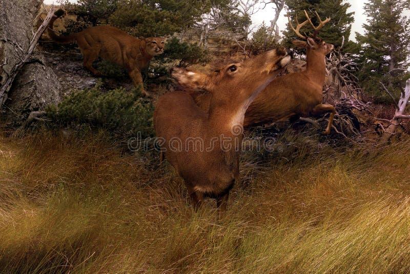 Panique-Horiz de cerfs communs images stock