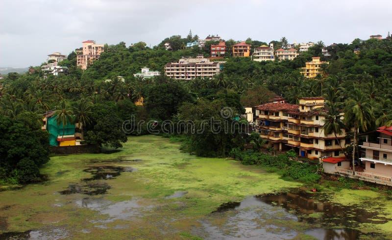 Panjim Goa India. Lovely moss filled lake in Panjim Goa India royalty free stock images