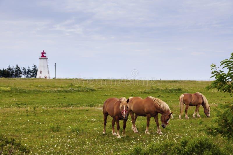 Panmure-Kopf-Leuchtturm auf Prinzen Edward Island stockfotografie