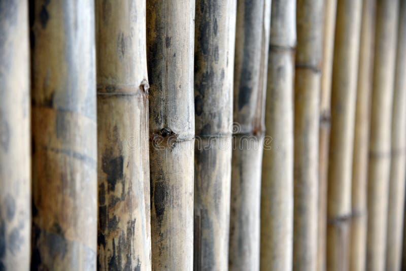 Panneau en bois pour des barrières Fond en bois de mur, texture en bambou de barrière de planche de vieux ton brun pour le fond photographie stock libre de droits