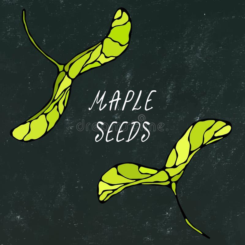 Panneau noir Graines vertes d'érable Automne ou collection de récolte d'automne Illustration de haute qualité tirée par la main r illustration libre de droits
