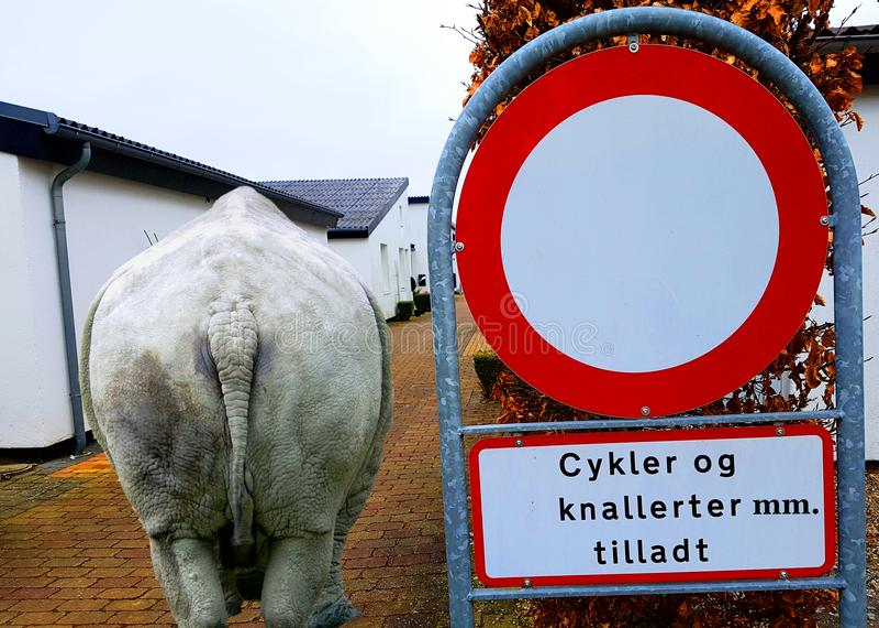 Panneau routier danois et un rhinocéros dans la ville photographie stock libre de droits