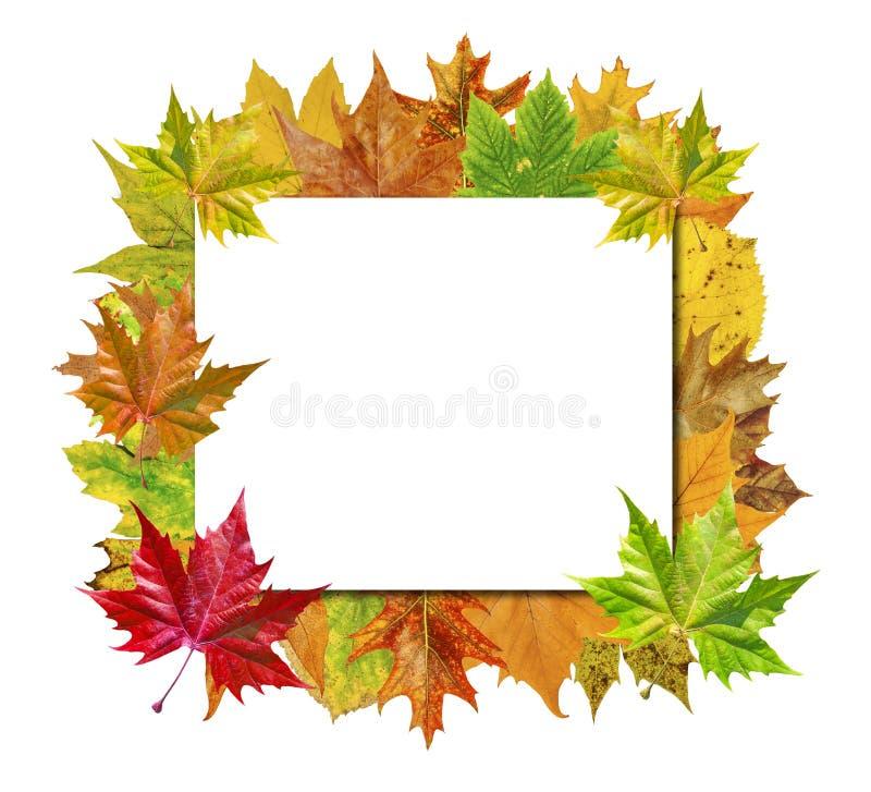 Panneau vide de cube avec les feuilles colorées d'isolement sur le blanc photographie stock