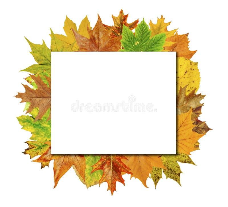 Panneau vide de cube avec les feuilles colorées d'isolement sur le blanc images stock