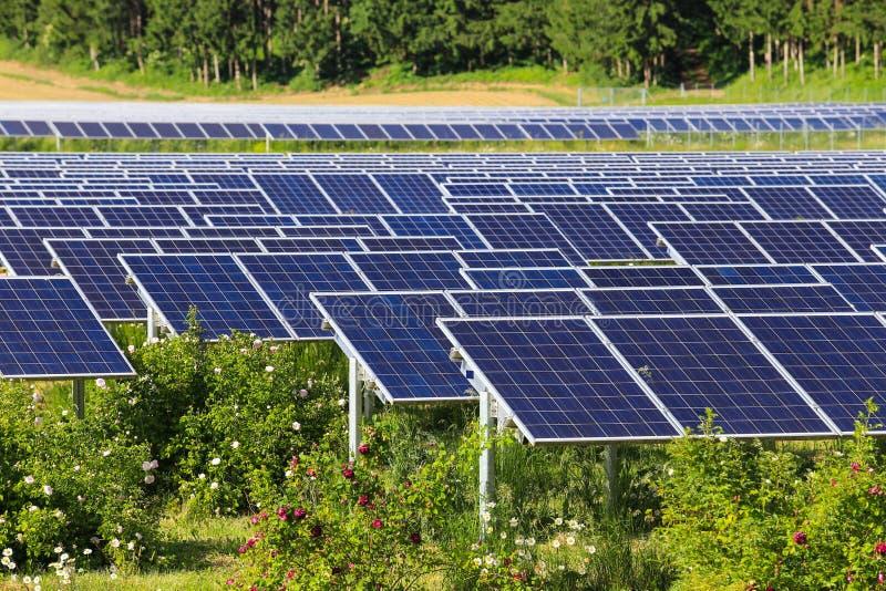 Panneaux solaires en vert photo stock