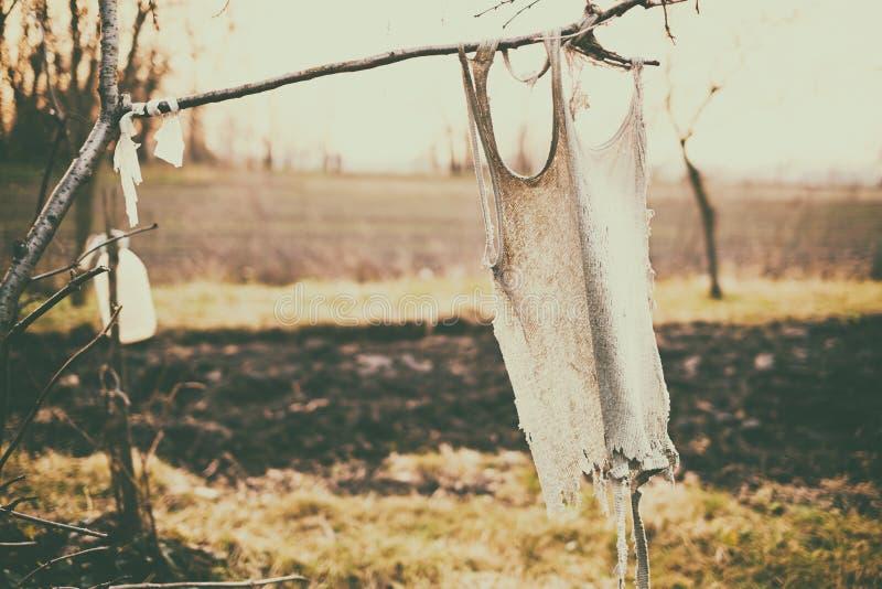Panno che appende sull'albero fotografie stock