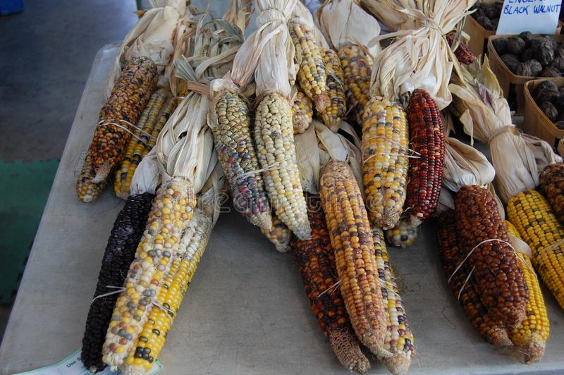 Pannocchie di granturco del mais alla scena orientale della via di Detroit Michigan U.S.A. del mercato fotografia stock libera da diritti