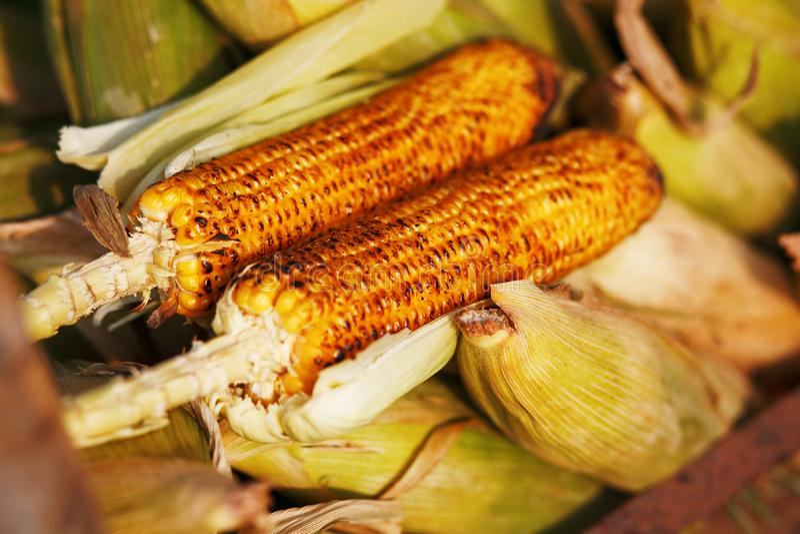 Pannocchie di granturco sulla griglia Immagine del primo piano con i semi e le mani Alimento asiatico, indiano e cinese della via immagini stock