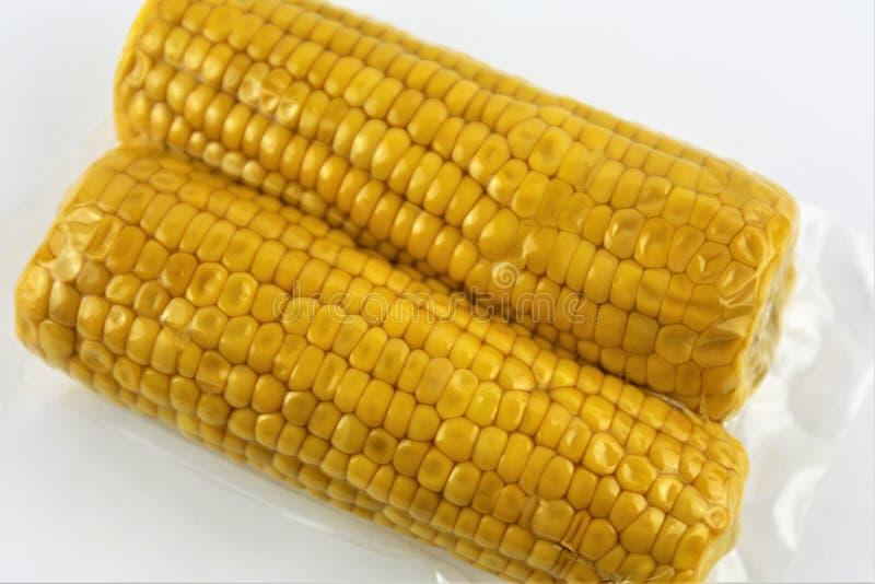 Pannocchie fresche chiuse sotto vuoto per il vide sous che cucina ritaglio su bianco immagine stock