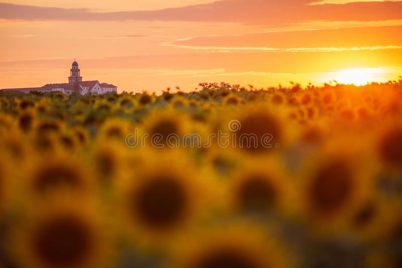 Pannonhalma Archabbey with sunflowers field and the Sun at the sunset time. In Hungary. Beautiful sunset on the sunflower farmfield royalty free stock images