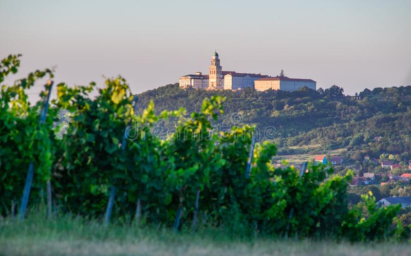 Pannonhalma Archabbey with vine grapes in the wine region vineyard, Hungary. Pannonhalma Archabbey with vine grapes in the vineyard, Hungary. Beautiful vineyard stock photo