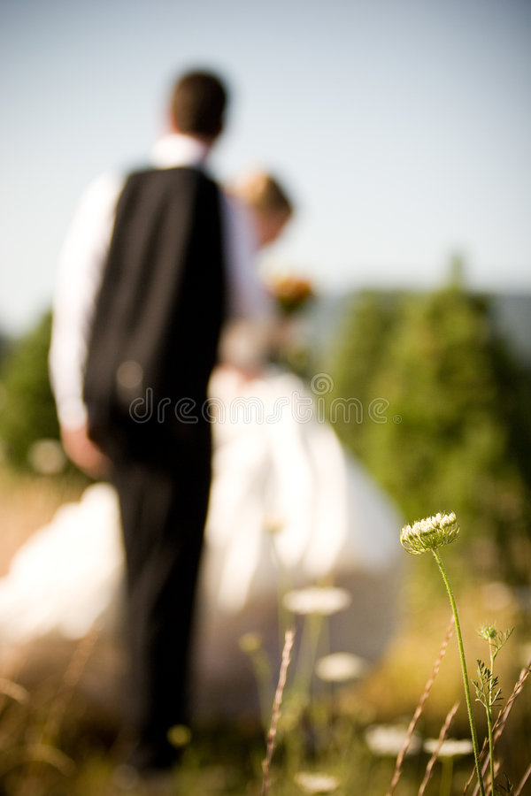 panny młodej kwiatu fornal fotografia royalty free