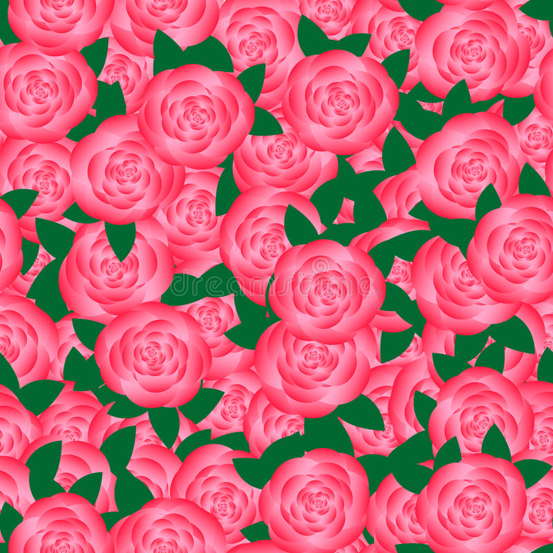 Pano-Blume von Rosen stockbild