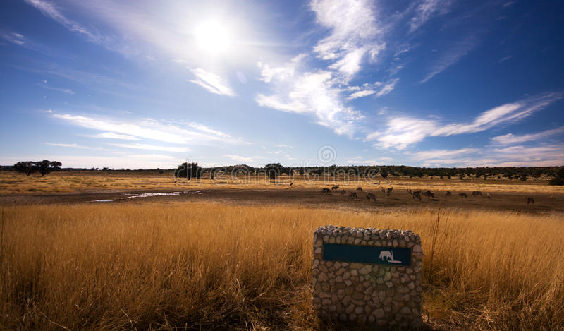 Download Pano Landscape Of Watering Hole In Kgalagadi Stock Photo - Image: 9804748