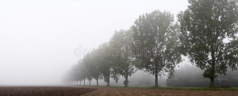 Panorâmico - fileira das árvores fotos de stock royalty free