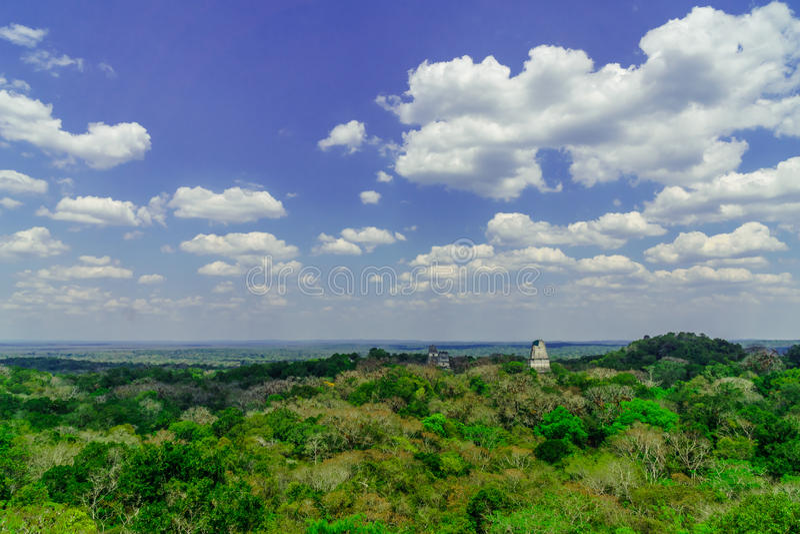 Panoram av Mayapyramiden i regnskogen av Tikal arkivfoton
