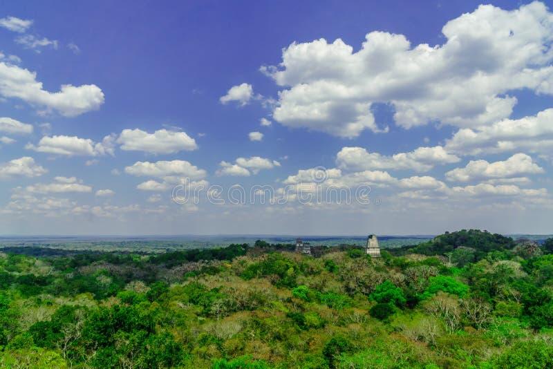Panoram de la pirámide del maya en la selva tropical de Tikal fotos de archivo