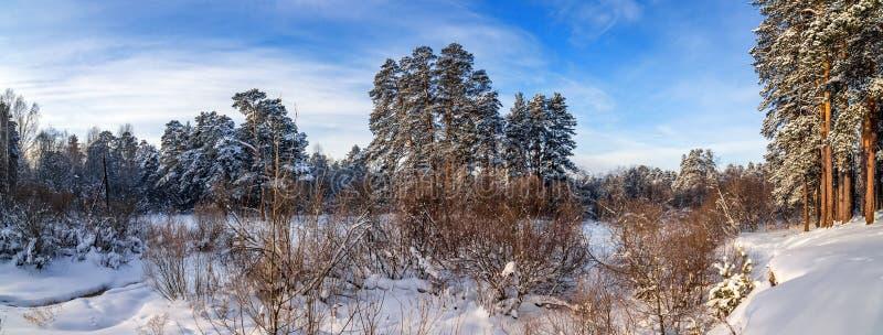 Panorama śnieżni lasy Urals, Rosja, zima fotografia stock