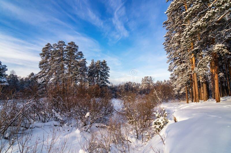 Panorama śnieżni lasy Urals, Rosja, zima obrazy royalty free