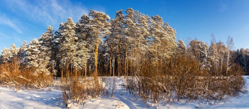 Panorama śnieżni lasy Urals, Rosja, zima zdjęcie stock