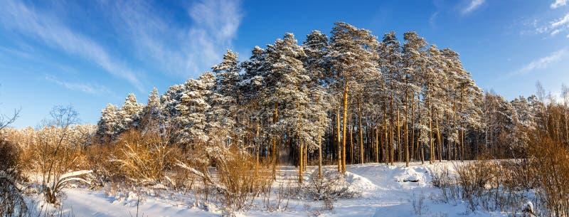 Panorama śnieżni lasy Urals, Rosja, zima obraz royalty free
