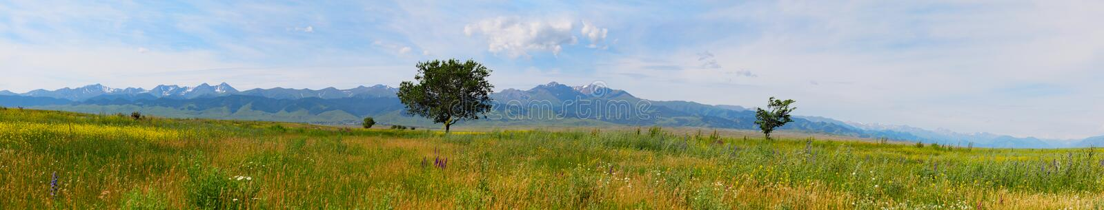 Download Panorama stock photo. Image of alone, meadow, green, panorama - 18715162