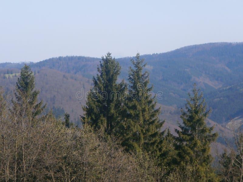 Panorama fotos de stock