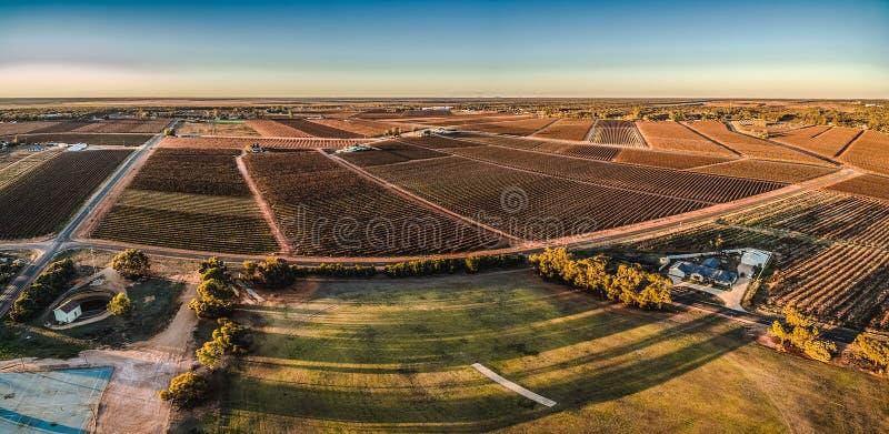 Panorama aéreo dos retângulos dos vinhedos em Monash fotografia de stock