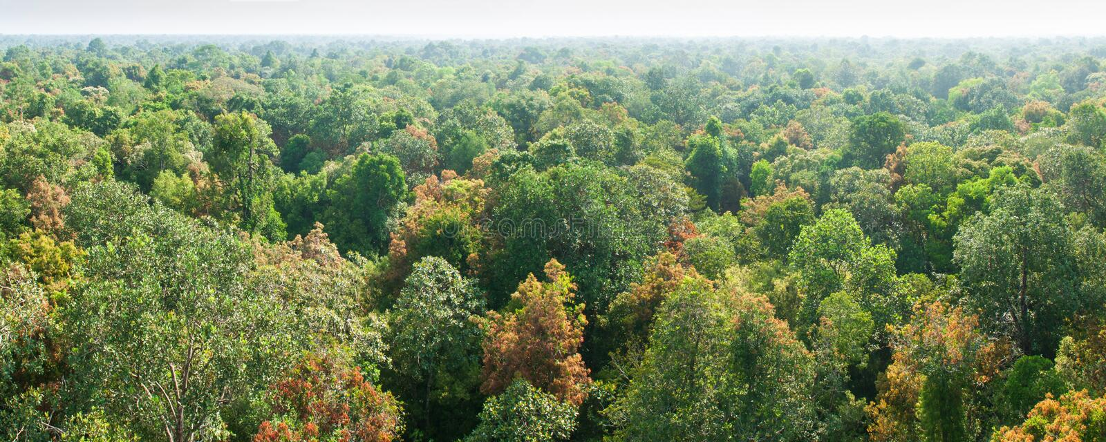 Panorama, aerial view. Sunrise shines down around peat swamp forest, beautiful shaped, shadow and green canopy. Sirindhorn Peat stock photos