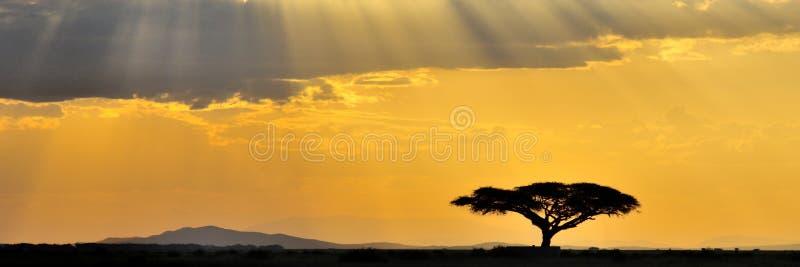 panorama afrykański zmierzch obraz royalty free