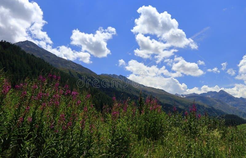 Panorama alpino del paisaje, Oetztal en el Tyrol, Austria Laurel de San Antonio y montañas fotos de archivo libres de regalías