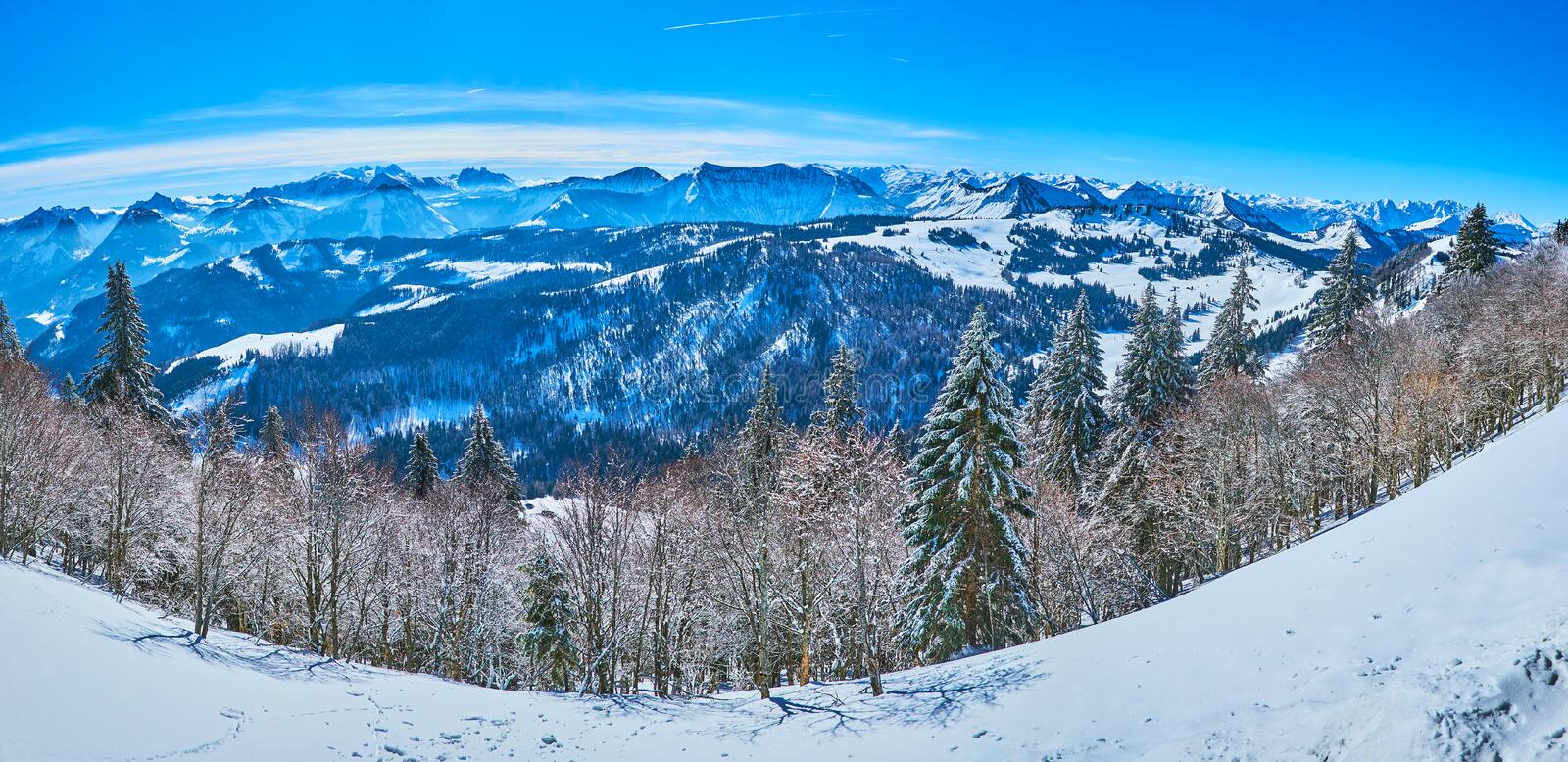 Panorama of Alps and forests from Zwolferhorn, St Gilden, Salzkammergut, Austria. The line of frozen fir trees along the slopes of Zwolferhorn mount with a view royalty free stock images