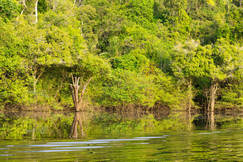 Panorama from Amazon rainforest, Brazilian wetland region. stock image