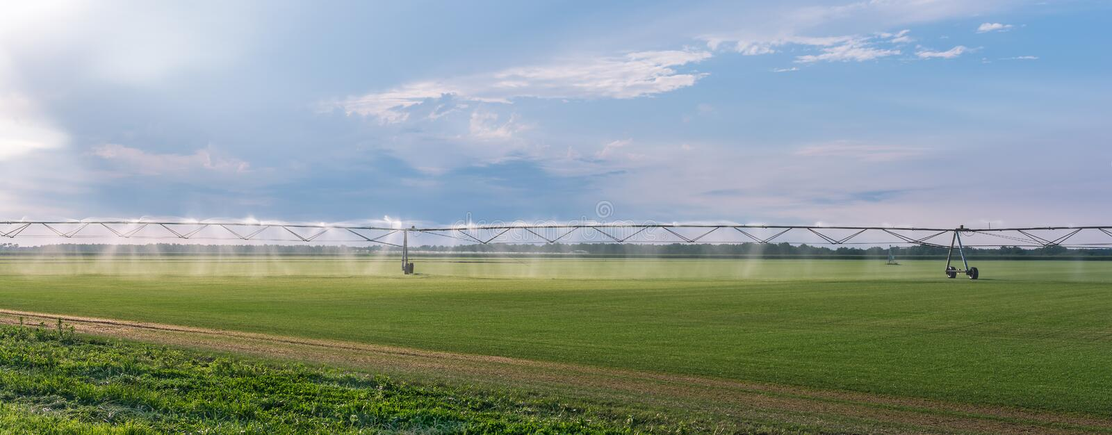 Panorama of the automated farming irrigation sprinklers system on cultivated agricultural landscape field stock photos