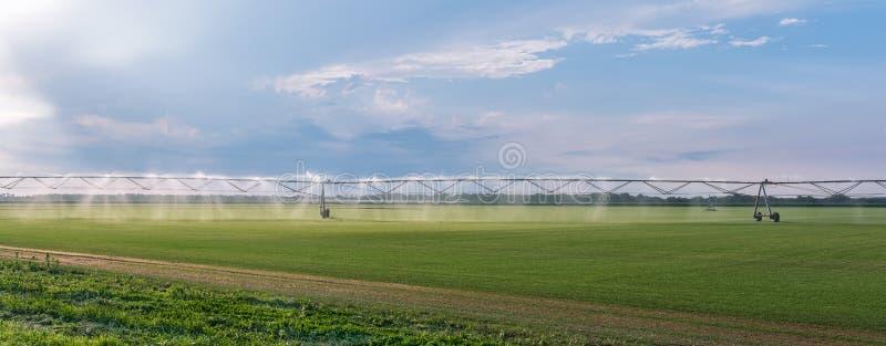 Panorama automatyzujący uprawia ziemię irygacyjny kropidło system na kultywującym rolniczym krajobrazu polu zdjęcia stock