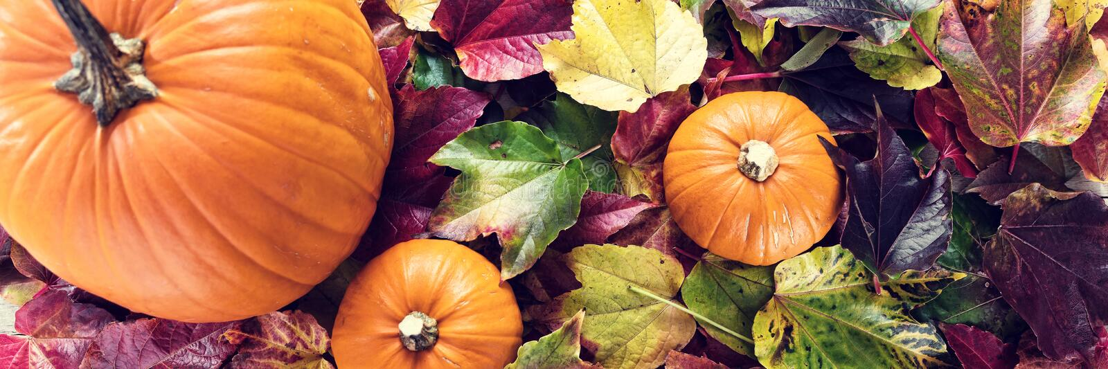Panorama with autumn decoration royalty free stock photo