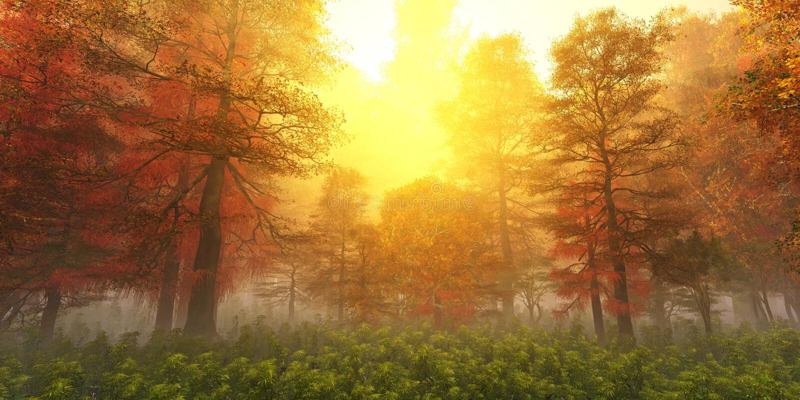 Panorama of the autumn landscape. The smoke in the forest in the morning. Tropical jungle in the fog. royalty free stock image
