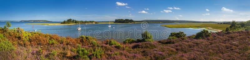 Panorama av öar i den Poole hamnen med ljungförgrund arkivfoto