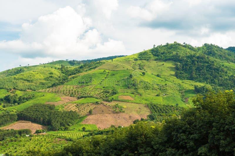 Panorama av berg och risfält med vägen och härlig sk royaltyfria foton