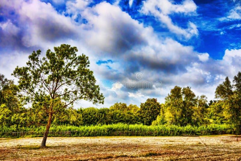 Panorama av bygd med land som ska odlas, och infödd vegetation royaltyfri fotografi