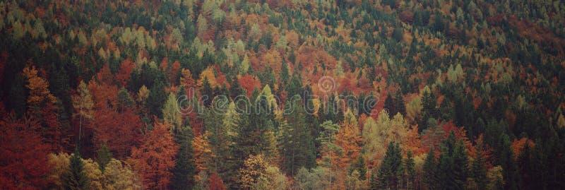 Panorama av den alpina blandade skogen arkivbilder
