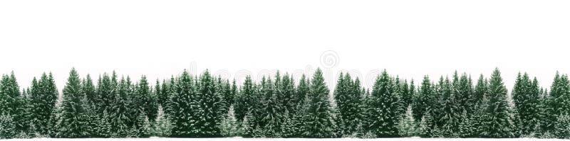 Panorama av den prydliga trädskogen som täckas av ny snö under vinterjultid royaltyfri foto