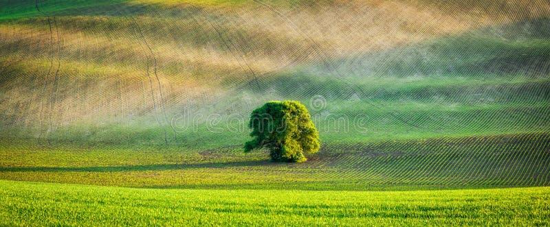 Panorama av det ensamma trädet i plöjt fält arkivbilder