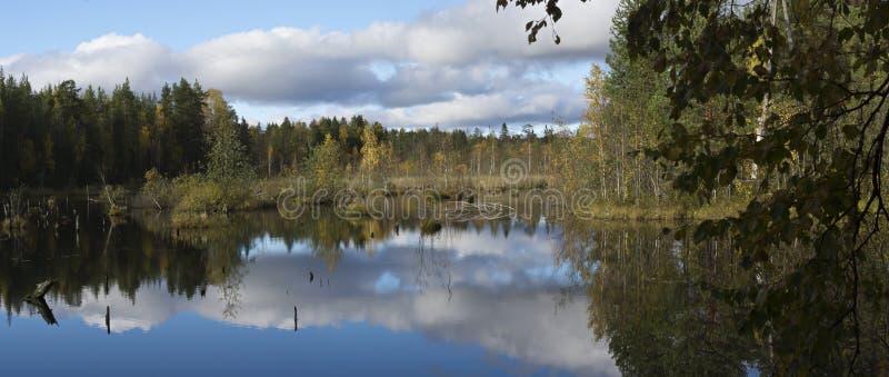 Panorama av det härliga träsket i taiga arkivfoton