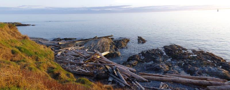 Panorama av drivved på stranden arkivfoto