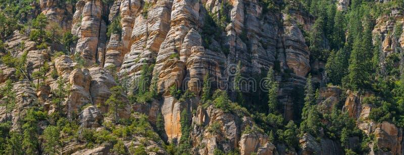 Panorama av en brant bergssida av sandstenklippor med sörjer träd som klamra sig fast intill dem arkivfoto